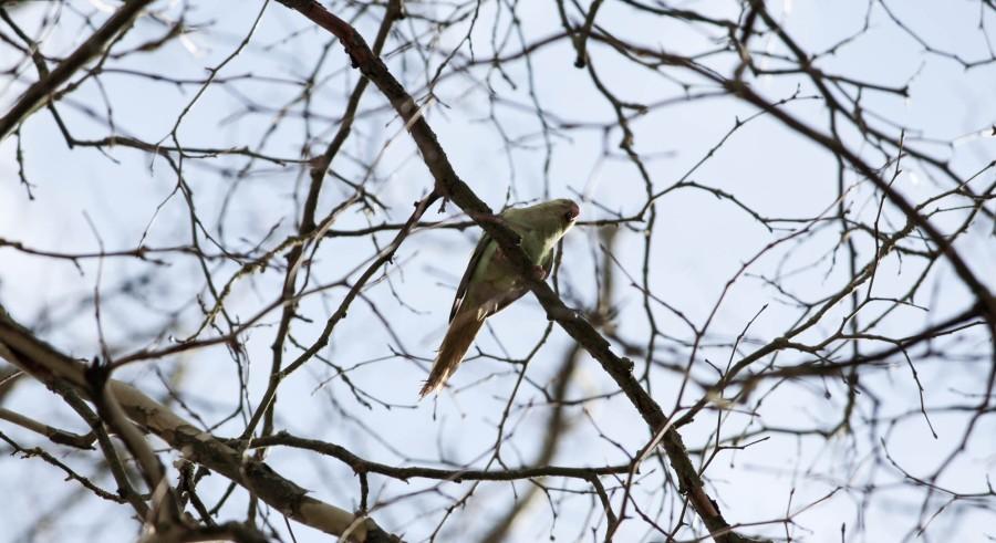Titelbild_früher Vogel
