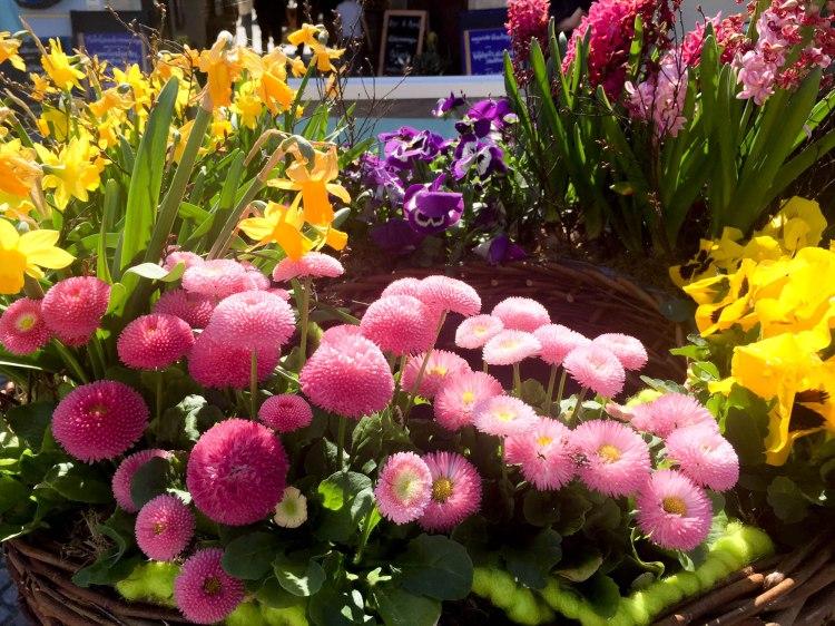Warum ich den Frühling so liebe_2